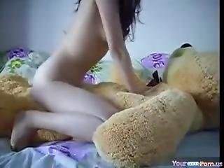 medvěd, masturbace, malé kozy