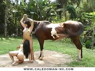 2 Brazilian Lesbians Orgasm Beside A Horse