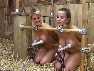 Hucow - Slave Training Bdsm