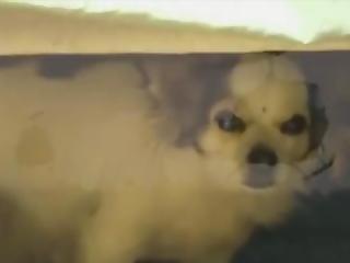 Dug Under The Bed Flashbacks Meme