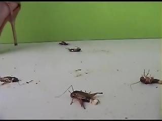Amatorski, Fetysz, Hardcore, Obcasy