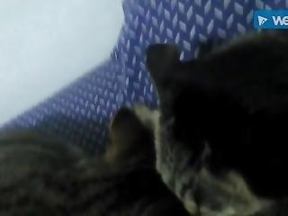 활동, 이상한, 하드 코어, 고양이