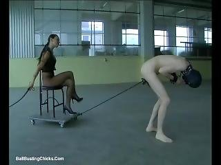 Slave Pulls Mistress Carriage With His Balls