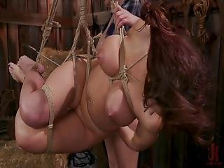 Babes In The Barn