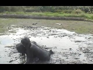 Filipina Mud Wrestling