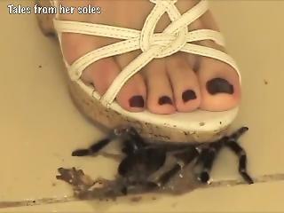 Crush Fetish Tarantula