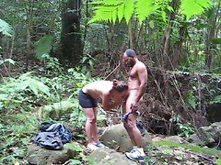 Arte, Floresta, Selva, Natureza, Ar Livre, Público