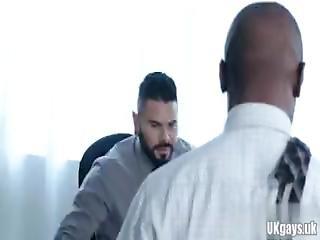 óriás fekete kakas videók