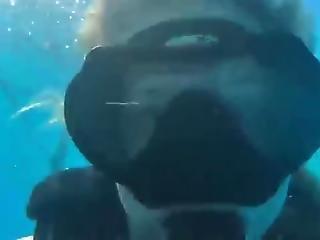 babe, fetish, pool, alene