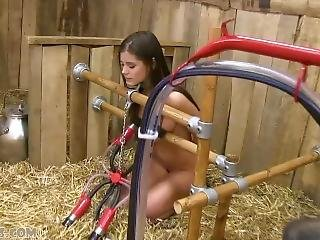Little Caprice Hot Milking Cow