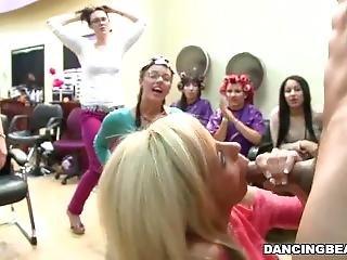 Dancingbear-party In The Salon