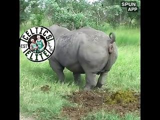 Celtics Elite Sex Tape
