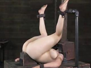 Gagged Bdsm Milf In A Box For Her Two Masters