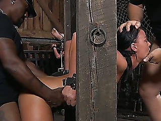 White Dark Brown Barn Tramps Restrained And Drilled Mercilessly