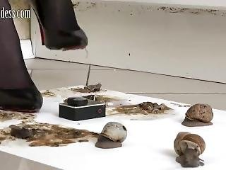 Marina Crushing Snails Under Sexy High Heels.