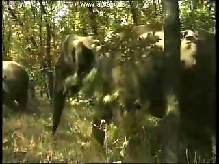 Queen Of Elephant Sahara 1 P2