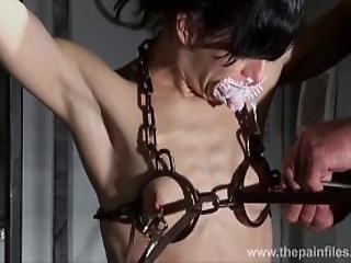 Tits Torture Free Tube