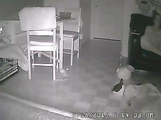 Caught Masturbating On Sofa