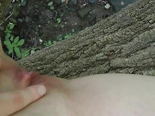 Peeing From A Fallen Tree In A Public Park