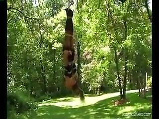 Sandra Nature Suspension