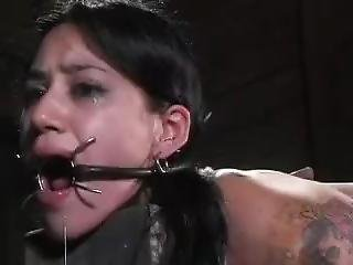 Insex Bagged Chained Probed