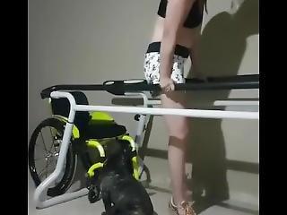 Dead Legs Dangle Paraplegic