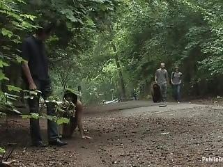 Aliz - The Dog Walk
