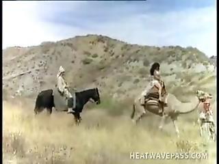 African King Fuck Arabians